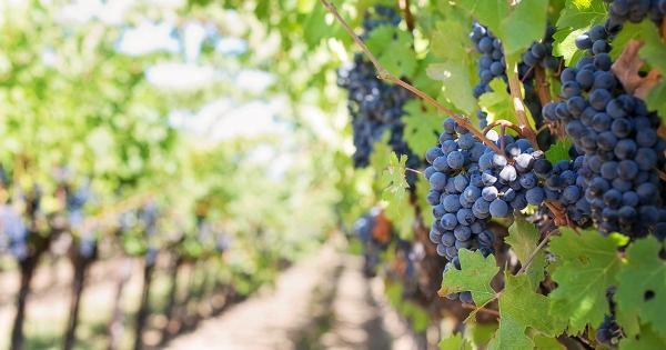 california's wine industry sustainable future