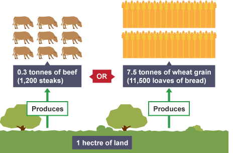 grains as part of the agriculture system