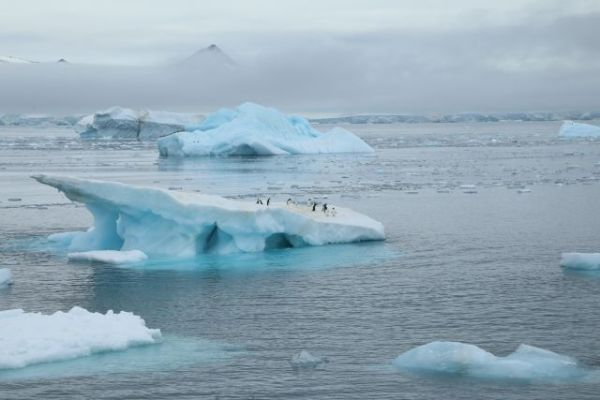 Signs of climate change can be seen throughout Antarctica, from the landscape to the life that inhabits it. Photo by Kelly Levin/WRI