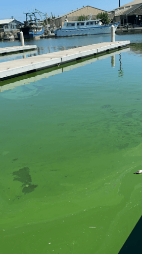 Water Resources Development Act to address harmful algae blooms in California's Sacramento Delta