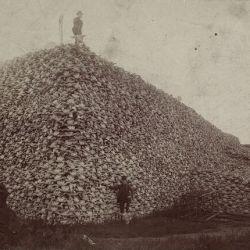Pile of buffalo skulls.