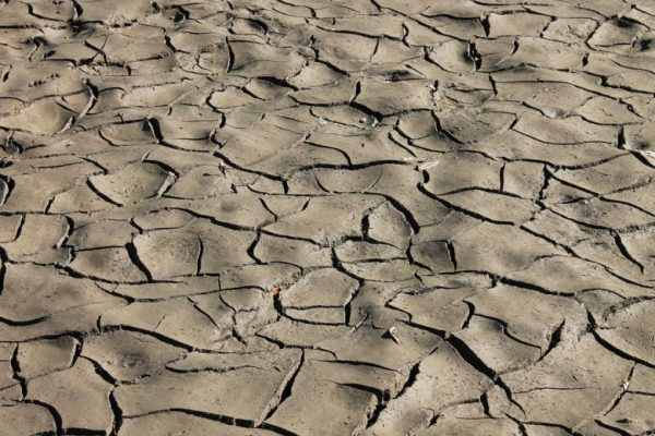Green technology that could prevent soil erosion