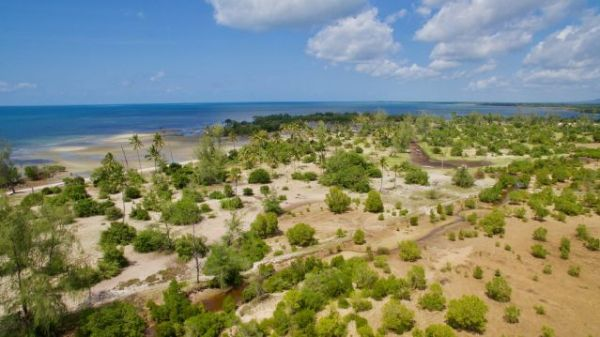 Mangrove restoration area in Vanga, Kenya. If protected and restored, Mangrove forests could protect up to 18 million people globally from coastal flooding. Photo by GRIDArendal