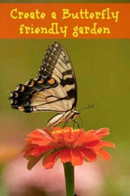 Create a butterfly friendly garden