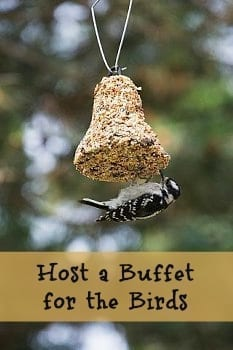 host a buffet for the birds title