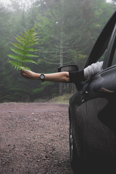 redheadventurer-liza-laboheme-travel-roadtripping-eastern-canada-car-fern