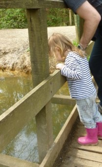 Daddy and little chick playing pooh sticks kent may
