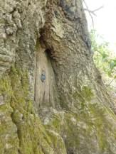 Fairy door in the oak tree nt sissinghurst gardens