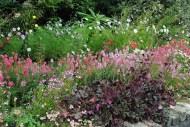 8.Avoca Café Gardens Kilmacanogue, Co Wicklow