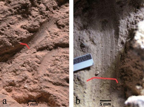 Impresiones fosilizadas de las flores en la tumba