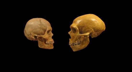 neandertal y hombre moderno