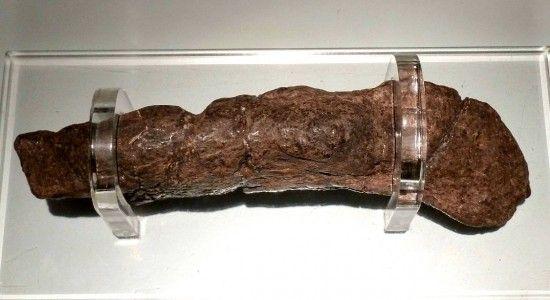 fosil heces humanas