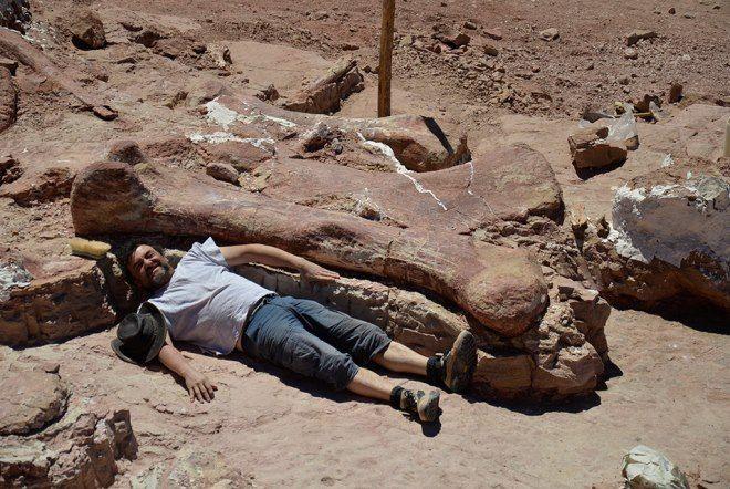 Técnico junto al hueso de dinosaurio. Crédito Museo Egidio Feruglio