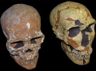 craneos humano moderno neandertal