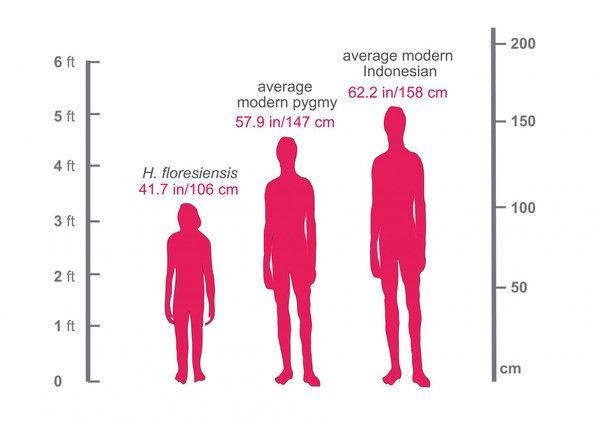 altura hobbits y pigmeos modernos indonesia