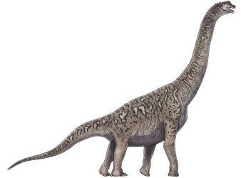 dinosaurio tienshanosaurus