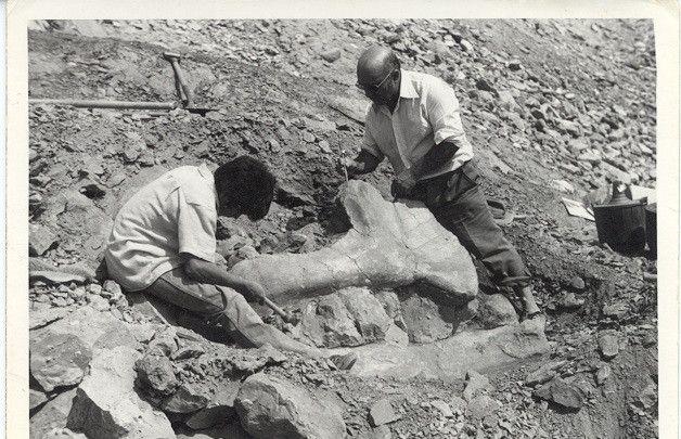 Aragosaurus ischiaticus