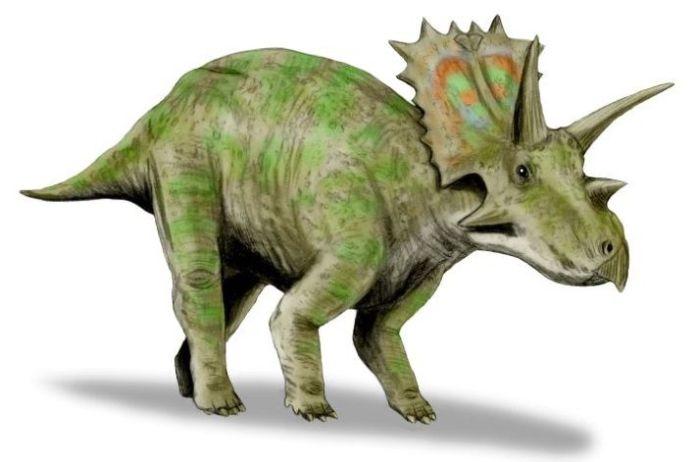 dinosaurio anchiceratops