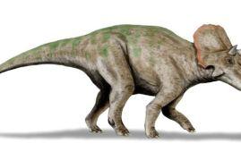 Avaceratops dinosaurio