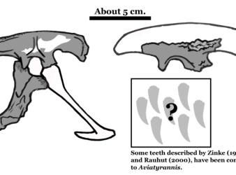 restos fosiles Aviatyrannis