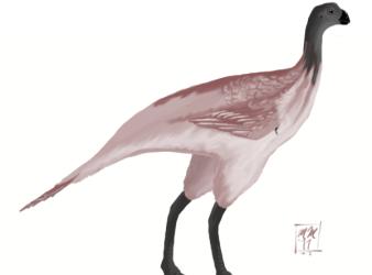 avimimus dinosaurio