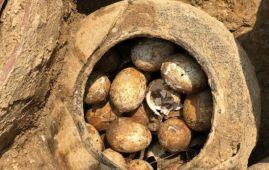 olla con huevos 2500 años