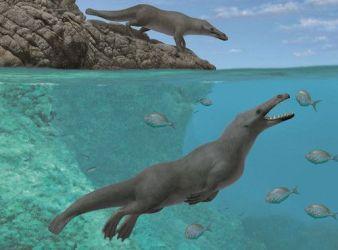 recreacion ballena cuatro patas