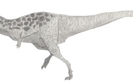 dinosaurio bahariasaurus