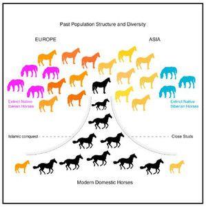 evolucion de los caballos