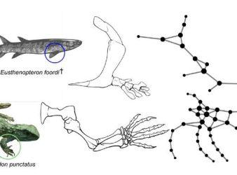 evolucion extremidades vertebrados
