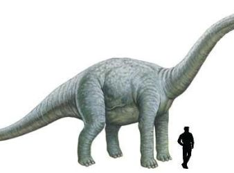 dinosaurio Bothriospondylus