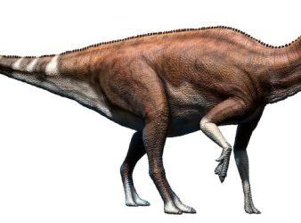 Brachylophosaurus dinosaurio