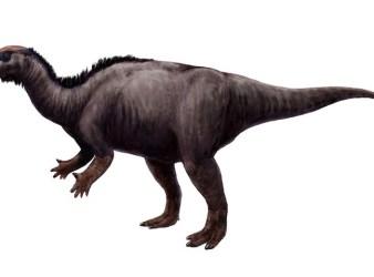 dinosaurio Camptosaurus