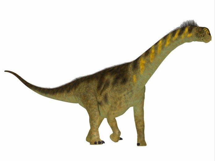 dinosaurio camarasaurus