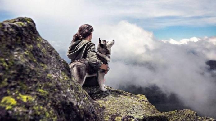 evolucion historia perros