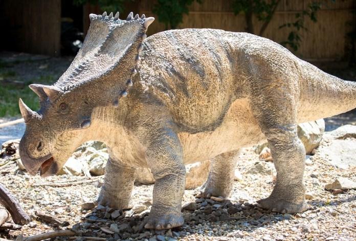 Chasmosaurus dinosaurio