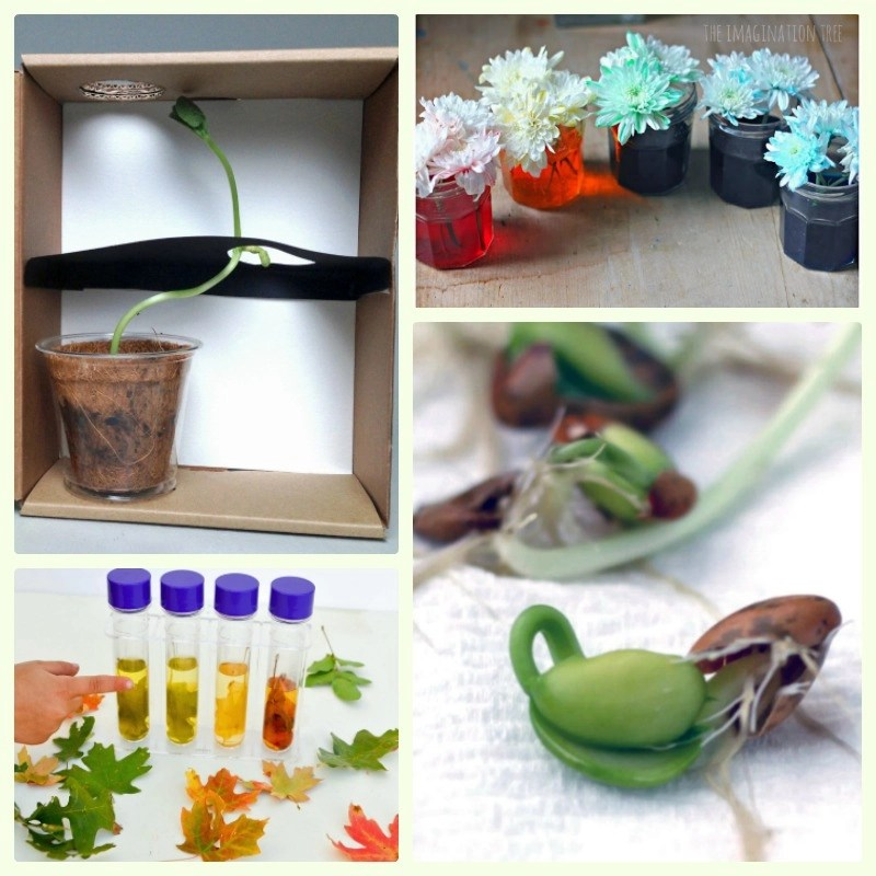 Easy science experiments with plants