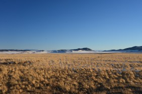 A swath of cured grasses near South Park, CO