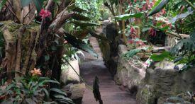 the living rainforest newbury