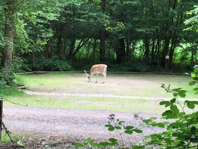 wellington country park campsite, family camping, camping near reading, berkshire