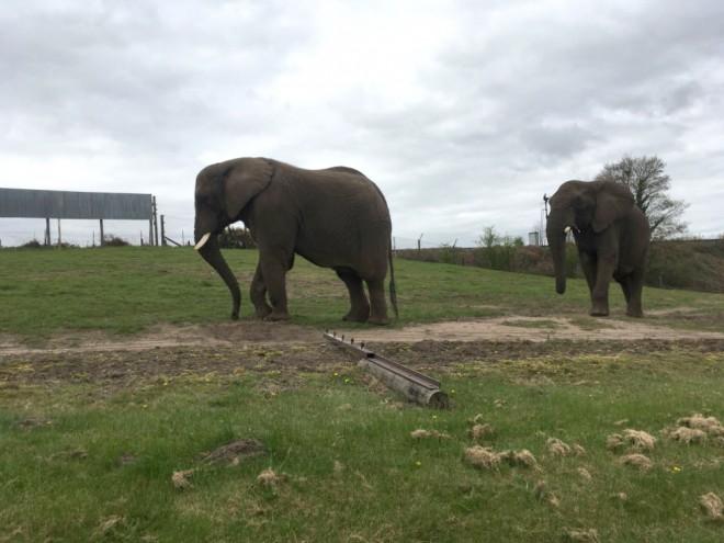 west midland safari park review, safari parks kids, elephants