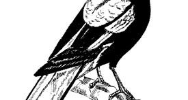 magpies kidlington, childcare in kidlington, kidlington preschool