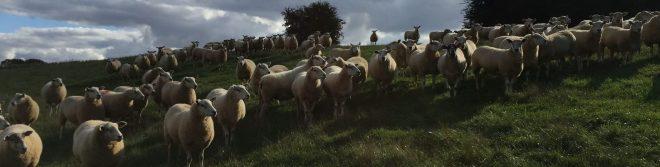 lambing banbury, lambing hadsham, where to feed lambs, where to see lambs
