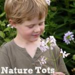 forest school, nature tots