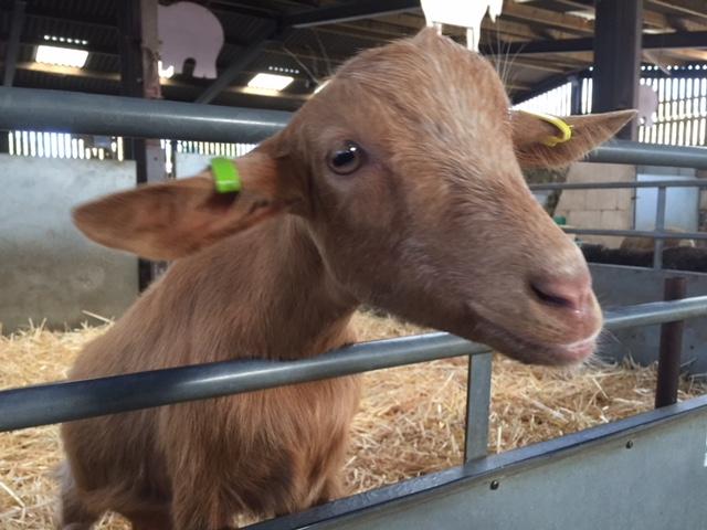 odds farm review, farm park buckinghamshire, farm park berkshire, farm parks near london