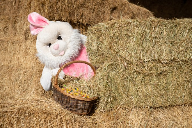 Easter activities Swindon, whats on easter holidays Swindon, Roves Farm Easter