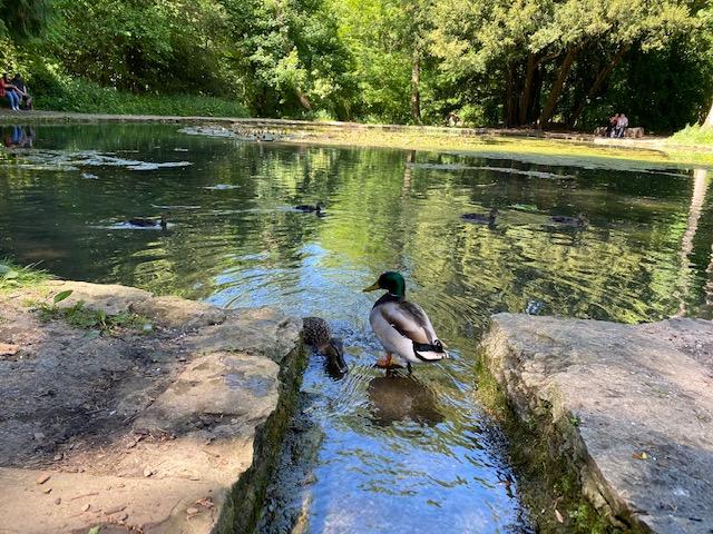duck feeding, wychwood wild garden, diggers wood, things to do in shipton under wychwood, free walks with kids