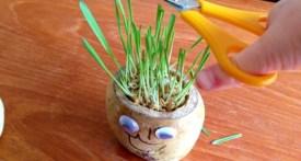 grass head, potato grass head, grass head doll, grass head haricut