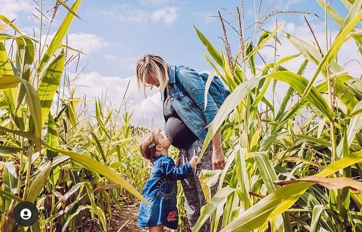 jc farm maize maze, great missenden maze