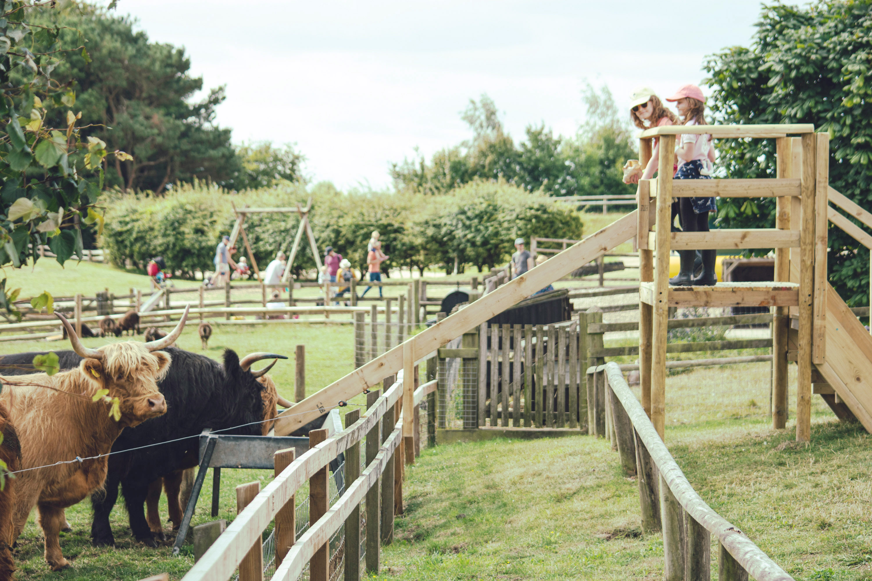 Farm attractions gloucestershire, cotswold farm attraction, days out with kids cotswolds, adam henson, cotswold farm park